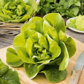 Lettuce Gustav's Salad Vegetable Plants