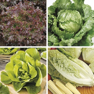 Lettuce Plant Collection