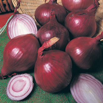 Red Baron AGM Onion Plants