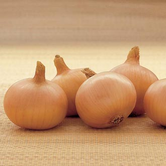 Onion Centurion AGM Bulbs