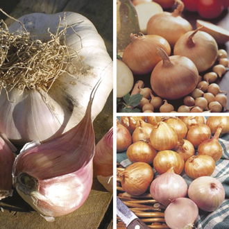 Spring Planting Onion, Shallot and Garlic Collection