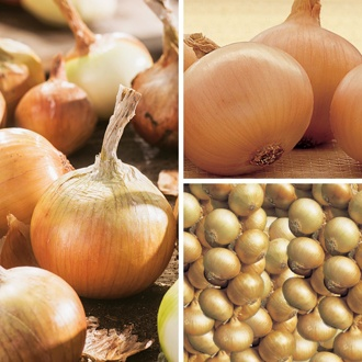 Untreated Onion Set Collection