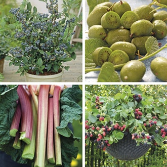 Gardeners' World 9cm Potted Fruit Collection