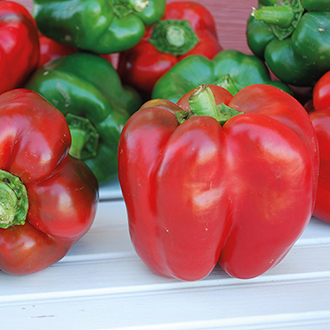 Sweet Pepper King Of The North Plants