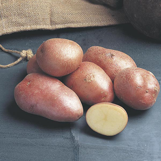 Potato Desiree (Maincrop Seed Potato)