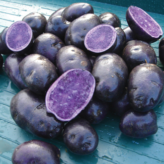 Potato Salad Blue (Maincrop Seed Potato)