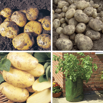 Second Cropping Potato Kit