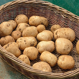 Potato Rocket (Extra Early Seed Potato)