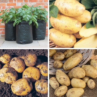 Ultimate Second Cropping Potato Collection