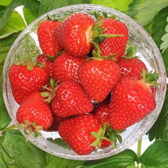 Misted Tip Strawberry Malling Centenary Fruit Plants