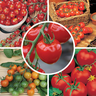 Outdoor and Indoor Tomato Veg Plant Collection