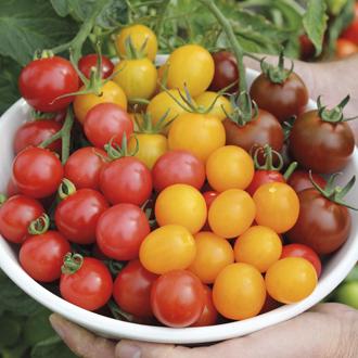 Tomato Sun Veg Plant Collection