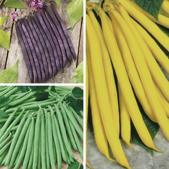 French Bean Plant Collection