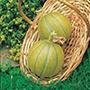 Melon Ogen