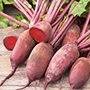 Beetroot Cylindra Vegetable Seeds
