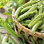 Pea Kelvedon Wonder Vegetable Seeds