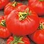 Tomato Marmande Seeds