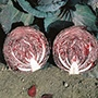 Cabbage (Red) Red Flare F1 Seeds