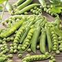 Pea Meteor Vegetable Seeds