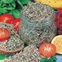 Salad Sprouts Alfalfa