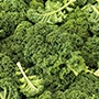 Kale Starbor F1 Vegetable Seeds