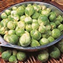 Brussels Sprout Cascade F1