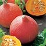 Organic Squash (Winter) Uchiki Kuri Seed