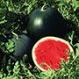 Watermelon Red Star F1