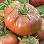 Tomato (Heritage) Black Russian