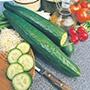 Cucumber Femspot F1 Seeds