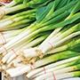 Onion TSX 8516 Seeds