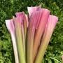 Celery Pink Vegetable Seeds