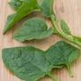 Spinach (Climbing) Malabar Spinach Seeds