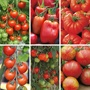 Tomato Seed Collection