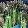 Asparagus Mondeo Crowns
