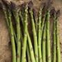 Asparagus Greenic