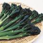 Broccoli Tenderstem Green Inspiration F1