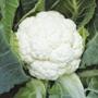 Cauliflower Sapporo