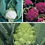Cauliflower Veg Plant Collection