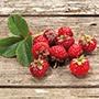 Framberry Fruit Plant