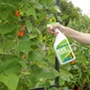 Pesticide Free Bug Control Spray
