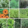 Annual Herb Plant Collection