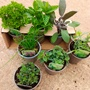 Sample Herb Plants