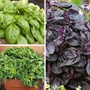 Basil Herb Collection
