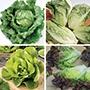 Lettuce Veg Plant Collection