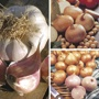 Spring Planting Onion, Shallot & Garlic Collection