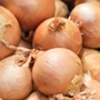 Brown's Golden Globe Onion