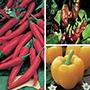 Chilli Pepper Mildish Collection