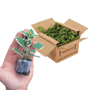 Young Plants Plug Size and Packaging