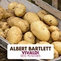Potato Vivaldi